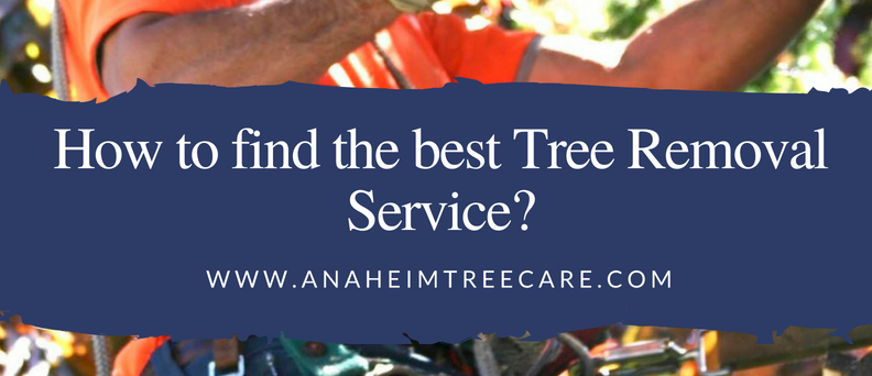 How To Find Out The Best Tree Removal Services For Your Home